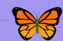 从头开始画蝴蝶的画法步骤 教你怎么画从头开始画蝴蝶简笔画