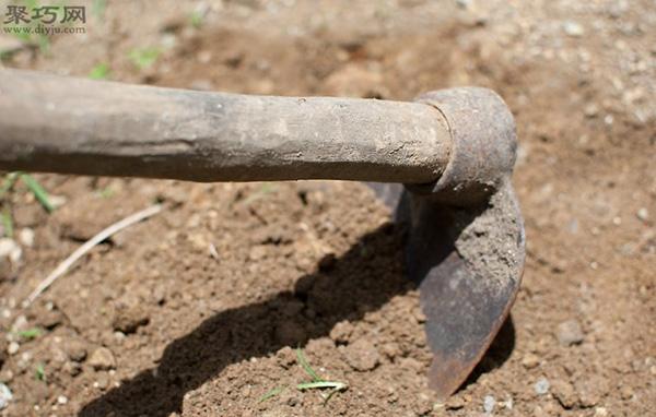 家里种土豆的种植方法 马铃薯栽培技术 2