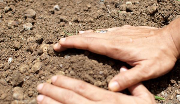 家里种土豆的种植方法 马铃薯栽培技术 4