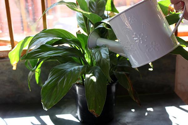 室内植物日常养殖方法 室内盆栽如何护理  2