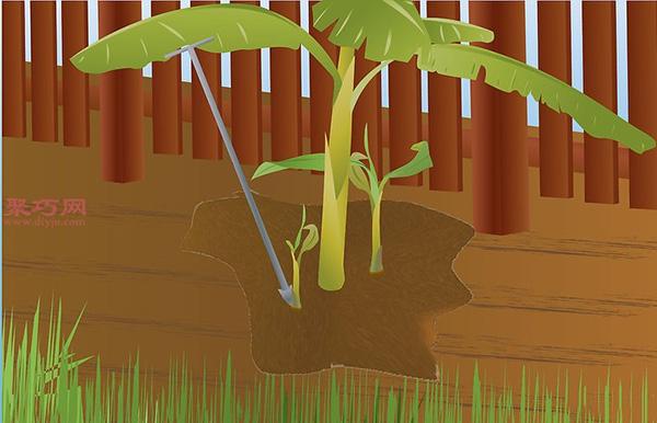 香蕉种植技术 教你家里怎么种植香蕉 9