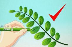 畫樹葉的步驟 教你現實中的樹葉怎么畫