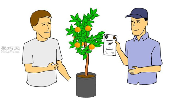 自家怎样种植柑橘 柑橘栽培种植技术