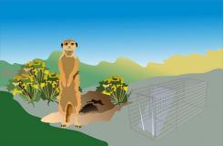 怎么有效消灭地鼠 15种根除地鼠隐患方法