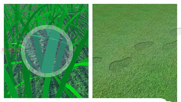 草坪如何灌溉才能既节水又有效