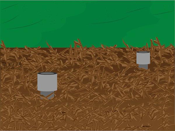 种植人参技术 人工怎么种植人参 8