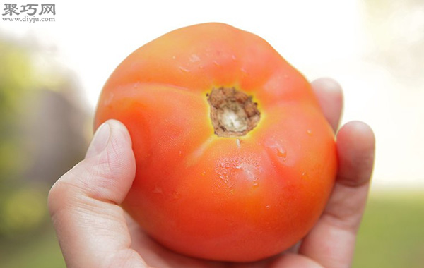 番茄怎么采摘 番茄采摘时必须注意的问题 3