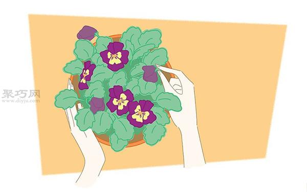 蝴蝶花的养殖方法 教你蝴蝶花怎么种植 6