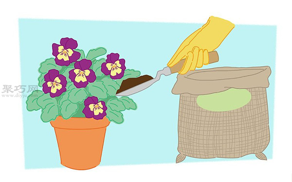 蝴蝶花的养殖方法 教你蝴蝶花怎么种植 5