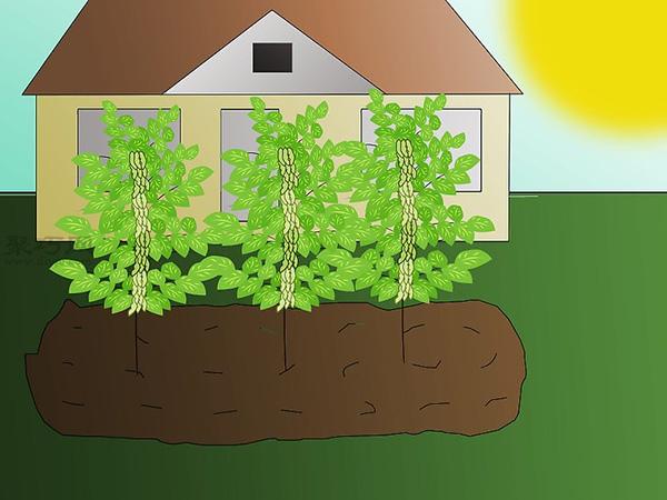 栽种大豆技术 庭院如何种植大豆