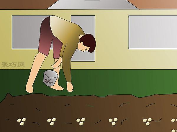 栽种大豆技术 庭院如何种植大豆 5