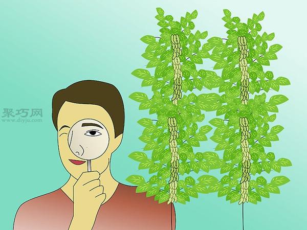栽种大豆技术 庭院如何种植大豆 8