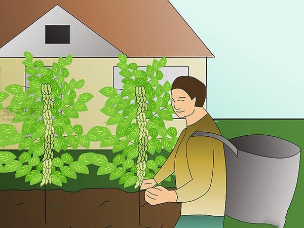 栽种大豆技术 庭院如何种植大豆 9