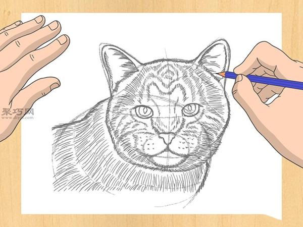 怎样画出一幅好画 铅笔素描猫的画法步骤 12
