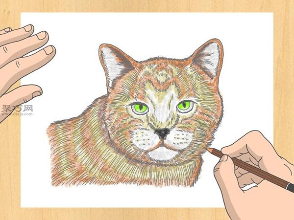 怎样画出一幅好画 铅笔素描猫的画法步骤 14