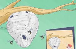消灭胡蜂的好方法 教你怎样消灭黄胡蜂