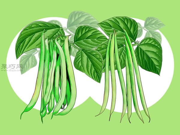 怎么樣種植豆類 2