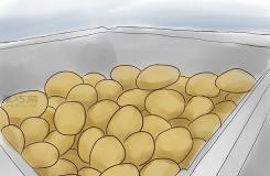 如何種植紅薯 教你種植紅薯教程