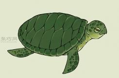 畫畫真實的烏龜的步驟 來看畫烏龜畫法步驟