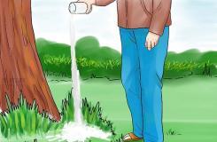 如何使用自然方法消除草坪和庭院的恙螨 來看去除恙螨教程