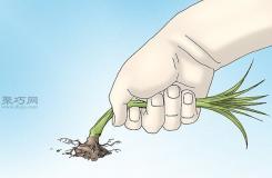 怎樣防止椿象進家里 教你驅除椿象的方法