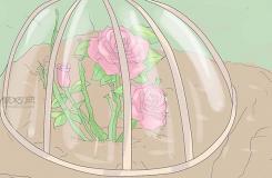 種植玫瑰教程 怎么種植玫瑰