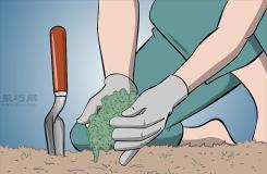 怎么樣在花園/草坪上種植苔蘚 來看種植苔蘚步驟
