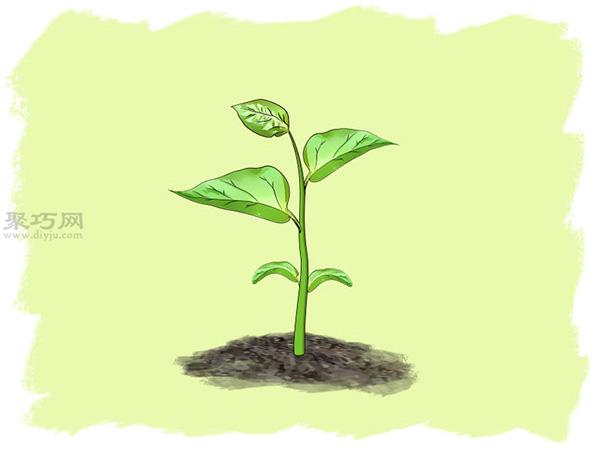 怎么样播种种植辣椒 10
