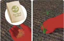 花園種植辣椒的準備工作 來看種植辣椒的方法