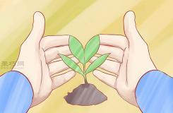 怎樣種植香草 一起學種植香草步驟