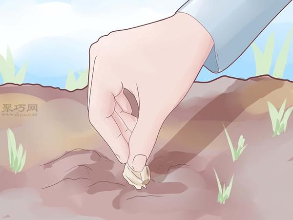 怎么樣種植大蒜 1