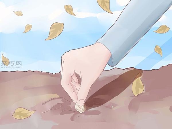 怎么樣種植大蒜 2