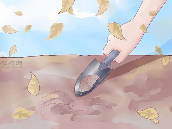 怎么樣種植大蒜 3