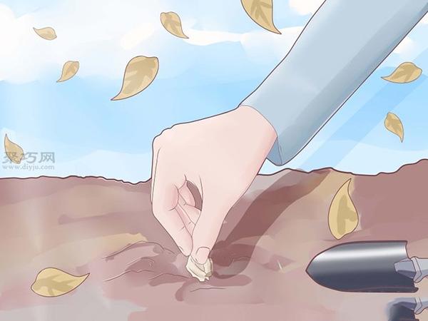 怎么樣種植大蒜 4