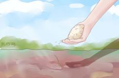 如何打理蒜苗 種植大蒜圖解教程
