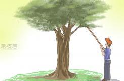 種橄欖步驟 怎么樣種橄欖