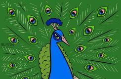 卡通孔雀的畫法 一起學畫孔雀步驟