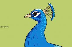 畫孔雀側面的步驟 來看畫孔雀畫法步驟