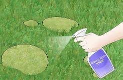 如何用物理化學法除苔蘚 一起學除掉草坪苔蘚教程