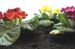 怎么種花兒 來看種花的方法