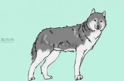 站立的狼畫法教程 一起學畫狼步驟