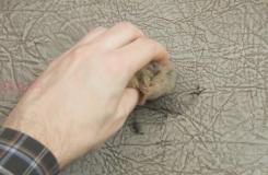 怎樣去除沙發上的墨跡 用肥皂水去除沙發墨跡步驟