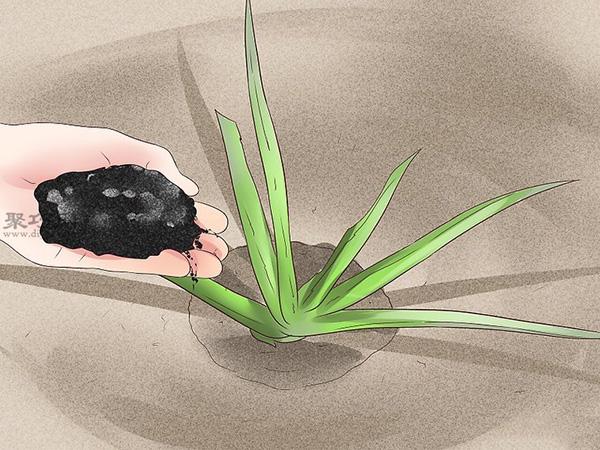 怎么种植或移植芦荟 5