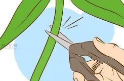 栽種甜石竹圖片教程 怎么樣栽種甜石竹