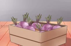栽種甜菜方法 如何栽種甜菜