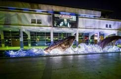 七万废旧塑料瓶打造巨型鲸鱼纪念欧洲绿色首都
