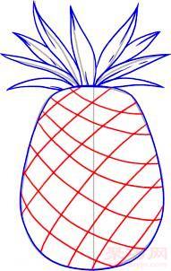 菠蘿簡筆畫第4步