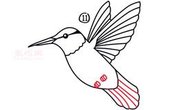 简笔画蜂鸟的画法 教你怎么画蜂鸟简笔画