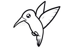 简易画蜂鸟的步骤 画蜂鸟的简笔画图片