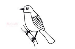 儿童简笔画罗宾鸟的画法 教你如何画罗宾鸟简笔画